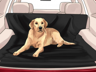 REMOVING PET ODOR FROM CARS